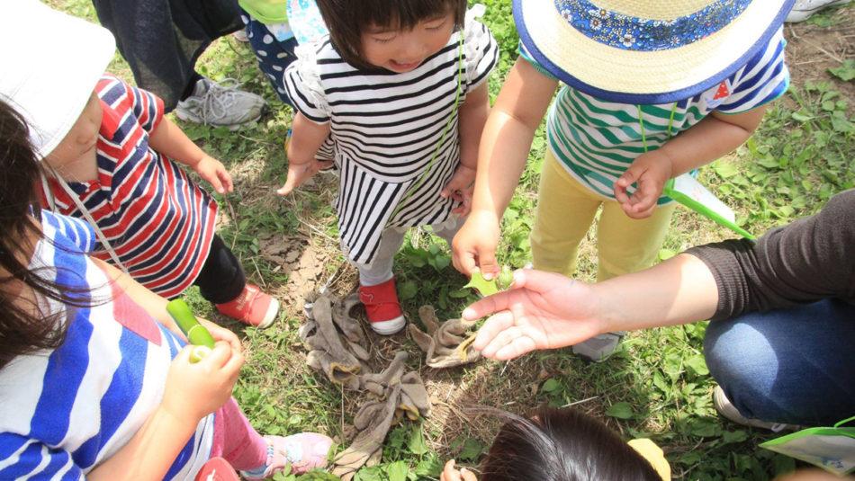 秋の自然観察会〜日本の四季を楽しむ会